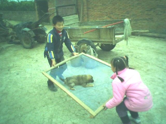 吕智鑫和妹妹玩狗