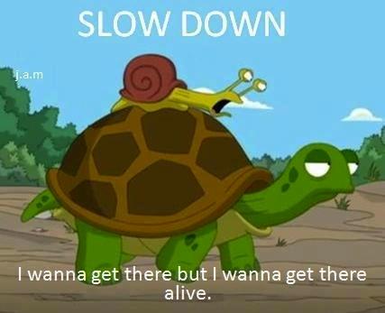 乌龟太快了